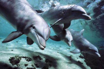 dolphins in tanks