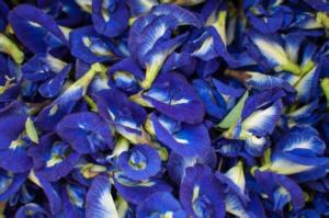 Ref: Blue Tea India